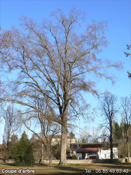 abattage arbre 85